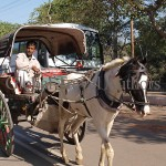 Horse, carriage, animal, domestic, travel, tourist, India, traffic, harnessed,