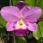 Flower, orchid, tree, vegetation, flora, garden, botany, botanical, bright, bloom, blossom