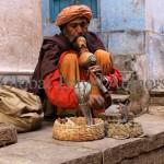 India, travel, Asia, international, Snake Charmer, Varanasi, India