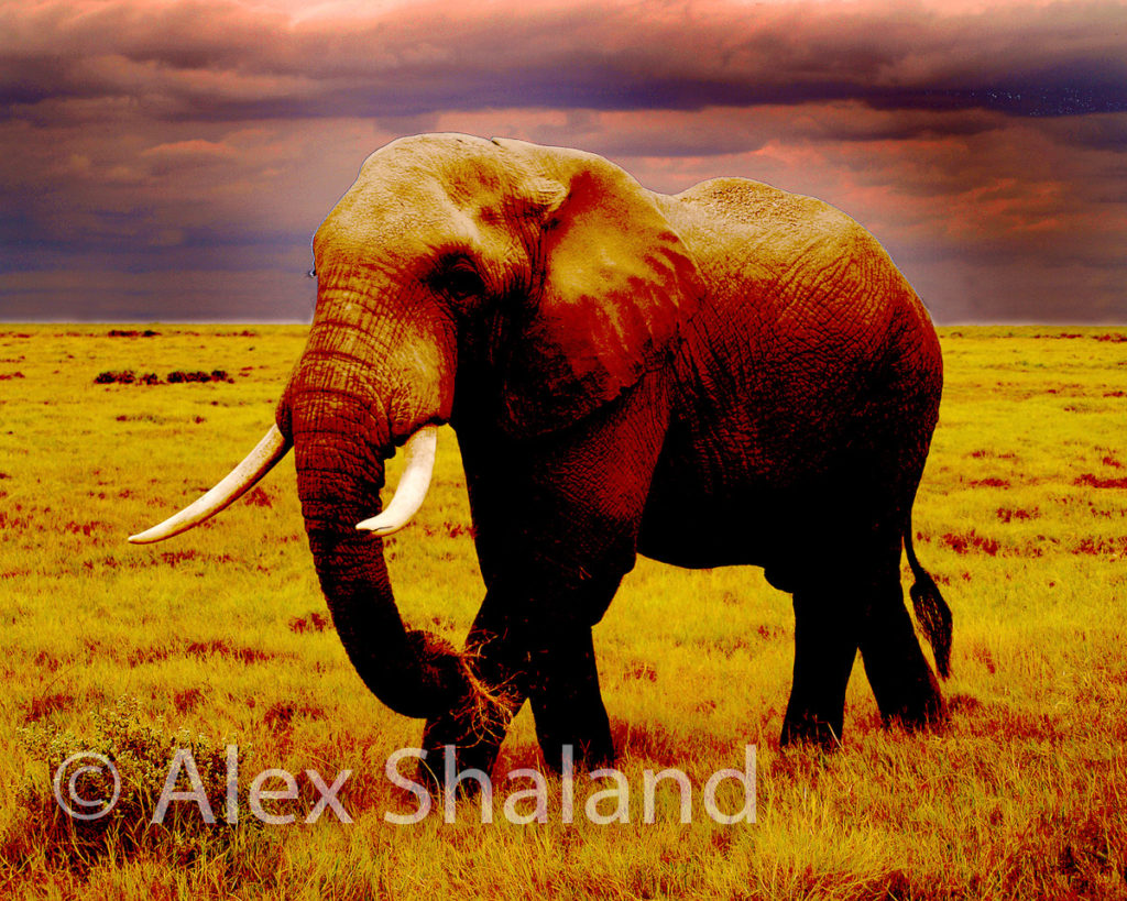 elephant walking under dark clouds