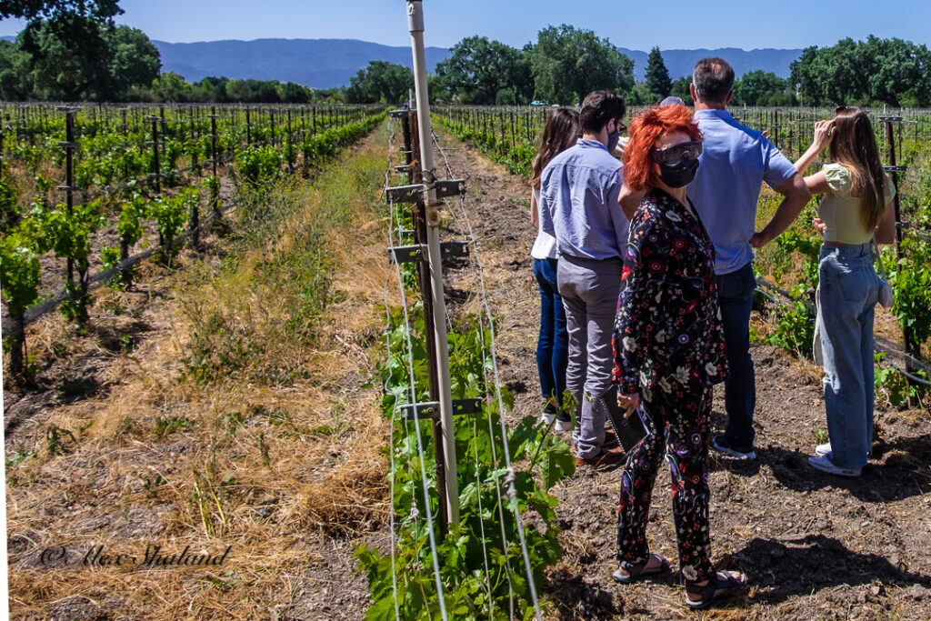 Visitors inspecting grapes